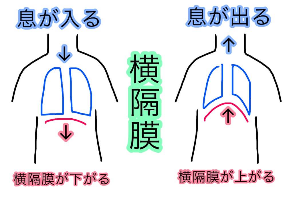 鍛え 方 肺活量 肺活量を鍛えるメリットって?効果的なトレーニング法も紹介します!